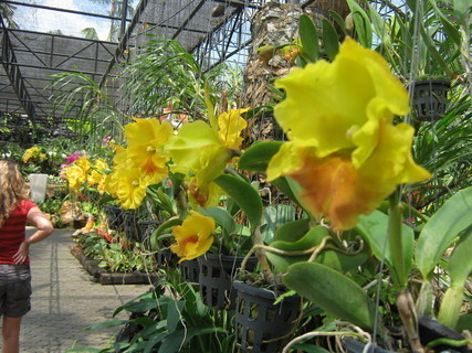 FOTKA - orchidea....