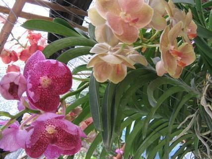 FOTKA - orchidea...