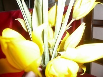 FOTKA - jaro doma1