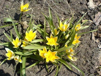 FOTKA - žluté jaro