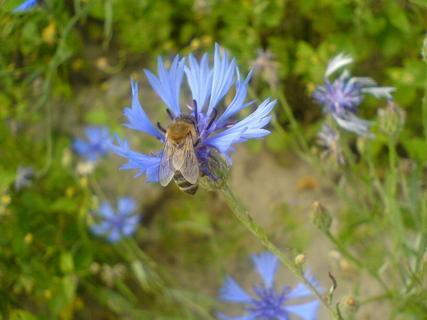 FOTKA - včelička & kytička
