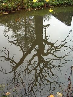 FOTKA - Stín stromu ve vodě
