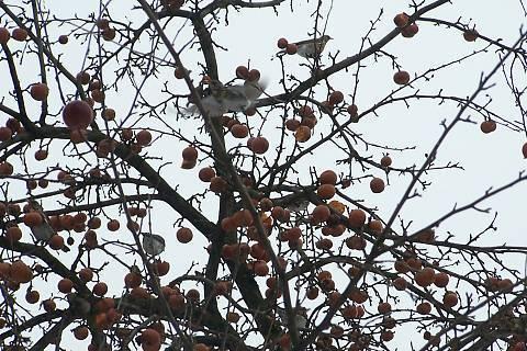FOTKA - I ptáci mají hlad...