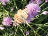 Motýl na pažitce
