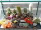 Kaktusy naše