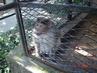 ZOO - opička