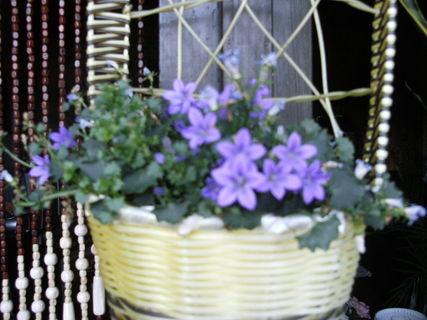 FOTKA - Kvetoucí ženich