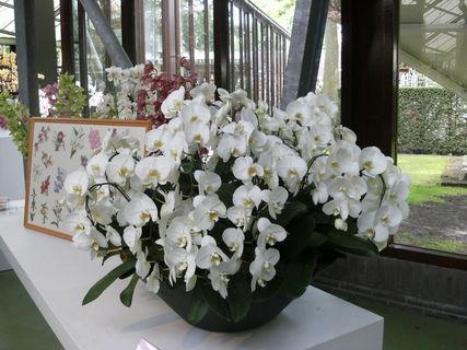FOTKA - orchideje 1