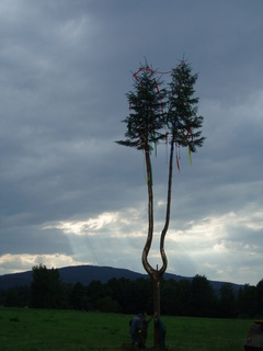 FOTKA - strom se dvěma špicema