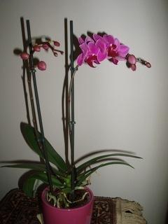 FOTKA - nová orchidej