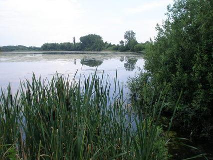 FOTKA - Chomoutovské jezeroc