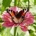 motýlek po dlouhé chvíly otevřel křidélka