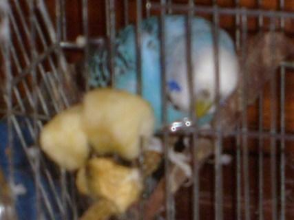 FOTKA - Pepoušek pózuje