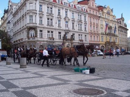 FOTKA - Koně na Staroměstském náměstí