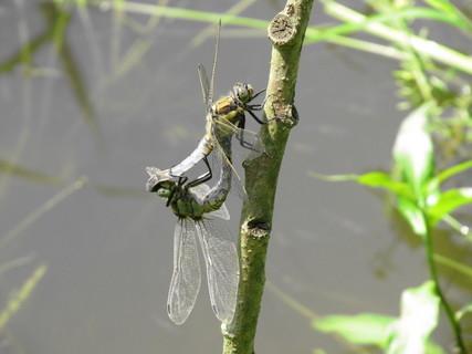 FOTKA - vážky
