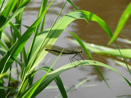 FOTKA - vážka