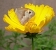 motýlek na kvítku