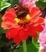 motýlek na květu