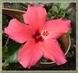 další květ