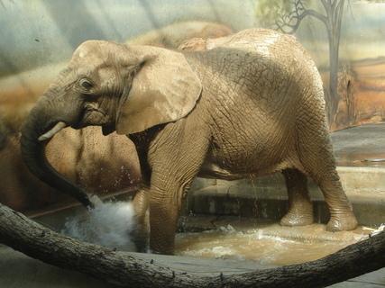 FOTKA - slon se koupe