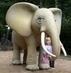 moje zlatíčko u slona