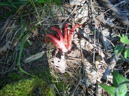 FOTKA - zvláštní houbička