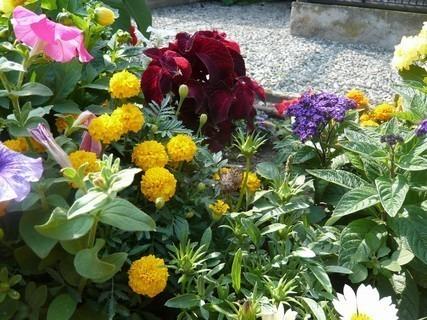 FOTKA - letní květena.