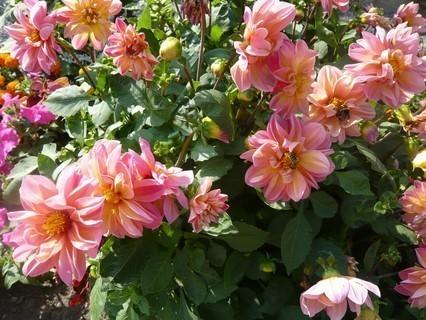 FOTKA - letní květena..