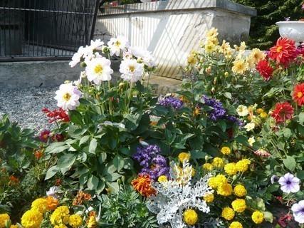 FOTKA - letní květena....