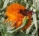motýlek11