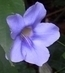 fialový kvítek