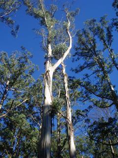 FOTKA - strom od protinožců