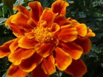 FOTKA - květiny,,,,