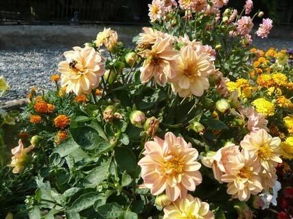 FOTKA - květiny,,,,,