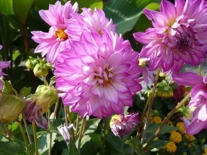 FOTKA - květiny........