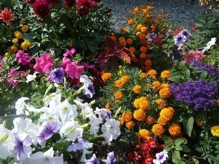 FOTKA - květinky