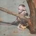 malé opičátko-bohužel foceno za sklem