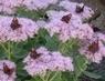to je nádhera tolik motýlů