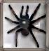 brrrrr...mám těžkou fóbii z pavouků,tenhle je naštěstí za sklem.