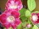 Zas kvetou