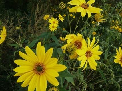 FOTKA - žluté kytky