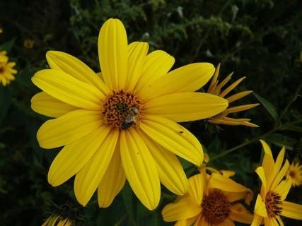 FOTKA - žlutá..\