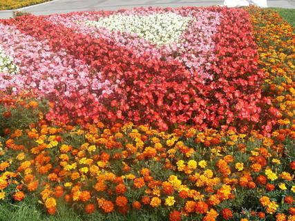 FOTKA - květinový koberec-