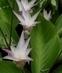 květ v botanické v Teplicích 4