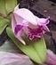 květ v botanické v Teplicích 6