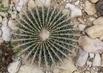 kaktus v botanické v Teplicích