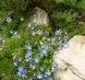 květ v botanické v Teplicích 10