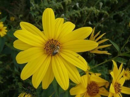 FOTKA - podzim v zahradě
