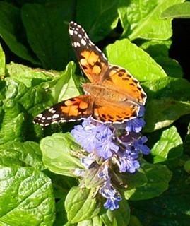 FOTKA - motýlek 25