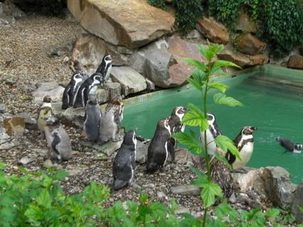 FOTKA - tučňáci
